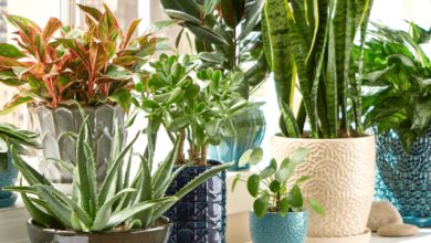Photo of Customer's Choice: 6 Plants To Keep Inside Your Home For A Healthy Environment