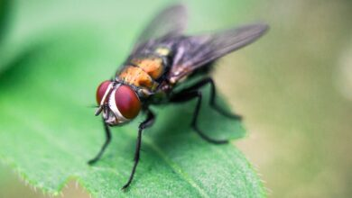 Photo of How to Get Rid of Flies Safely and Naturally?