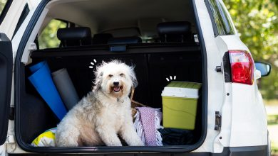 Photo of How to Make Your Pet's Vacation a Success With You?