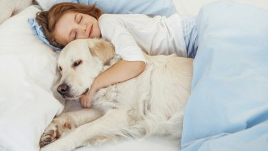 Photo of The 5 Benefits of Sleeping With A Dog – Best Explanation