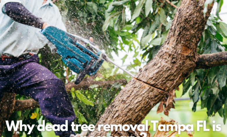 Why dead tree removal Tampa FL is necessary