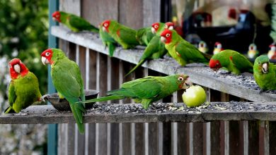 Photo of Parrots population in the wild