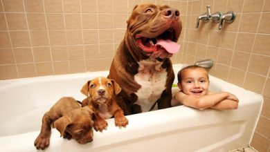 Photo of 13 mistakes we make with dogs   big gemini kennels